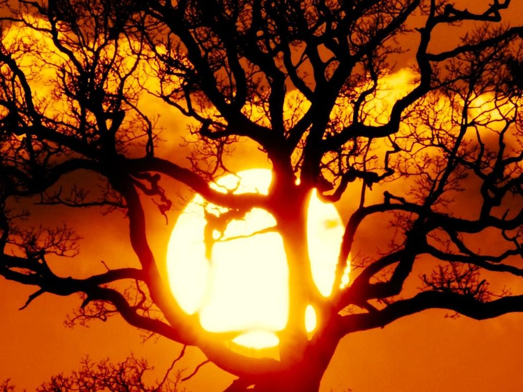 Be Sunset Tree