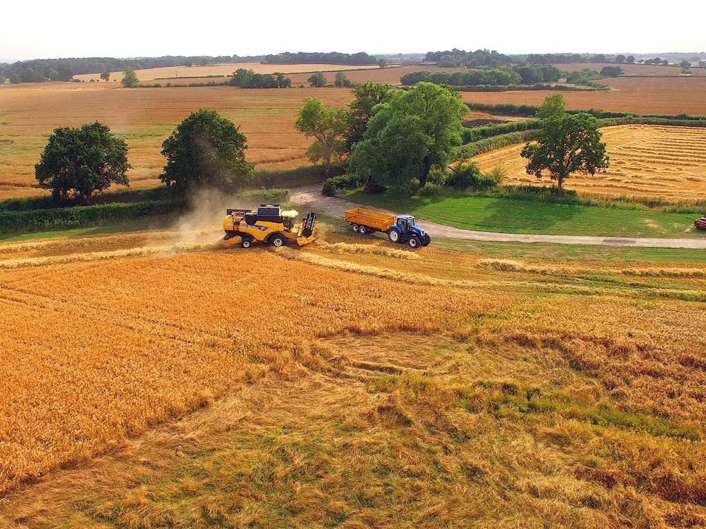 Golden Harvest 2015