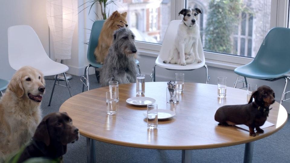 MATT SHAW CINEMATOGRAPHER - Tesco Pet Insurance