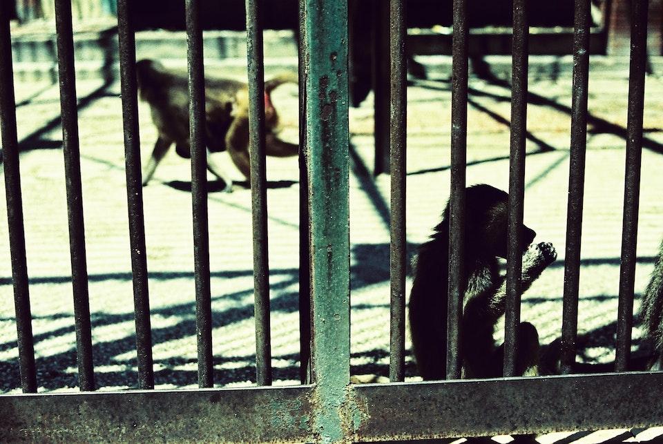 At the zoo -