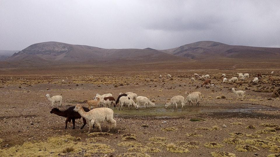 South America Lat-11