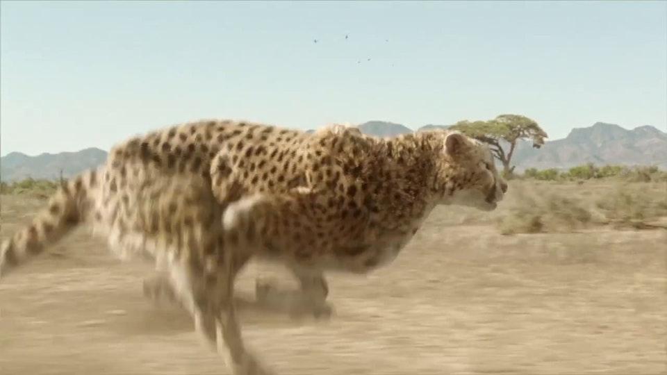 Woolworths - Super Animals 'Cheetah'