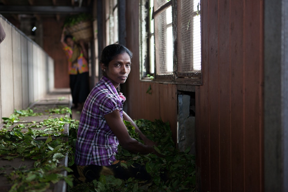 A woman working in a tea factory - Care International, Sri Lanka