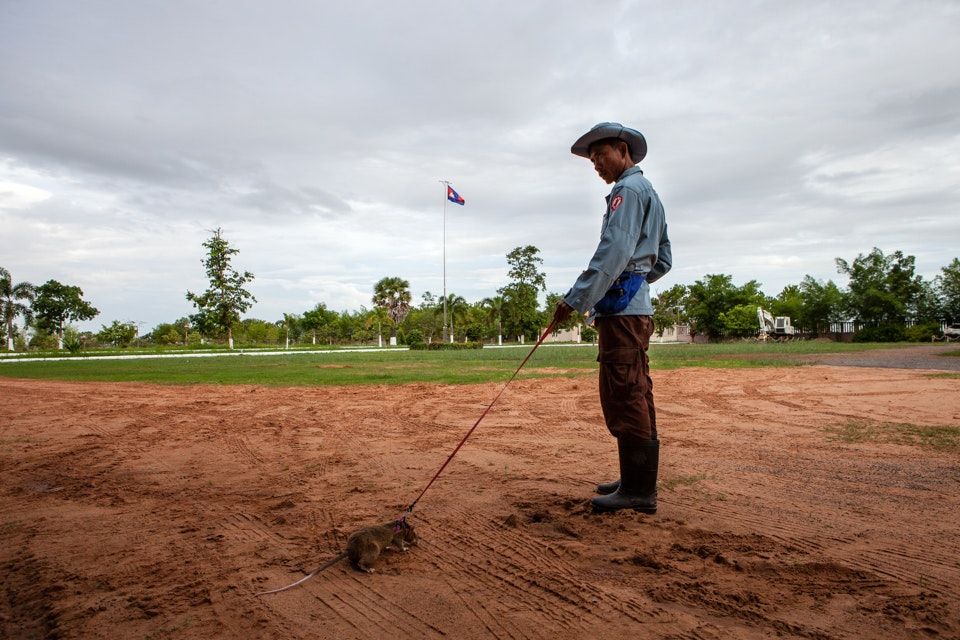 Apopo, Siem Reap 2