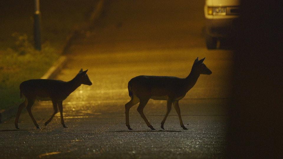 Night Drive -