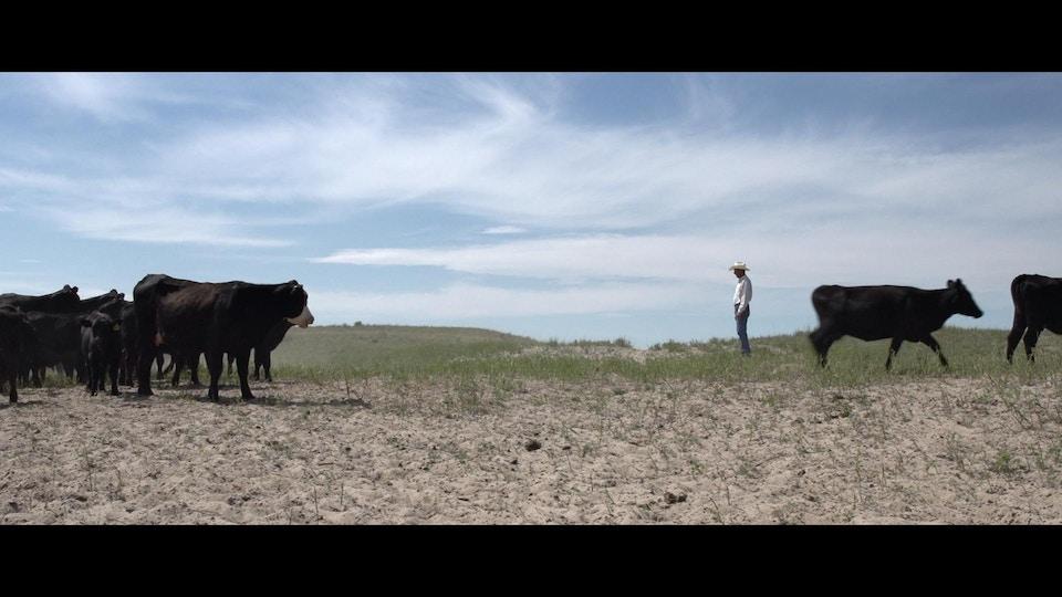 Beast - Nebraska, The Story of Steak