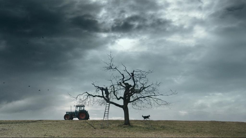 *IP Suisse Denner* Director Marc Wilkins onfilm