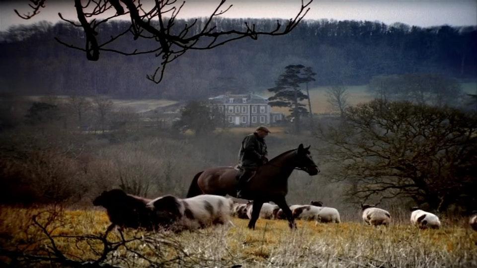 ING - Horse breeder