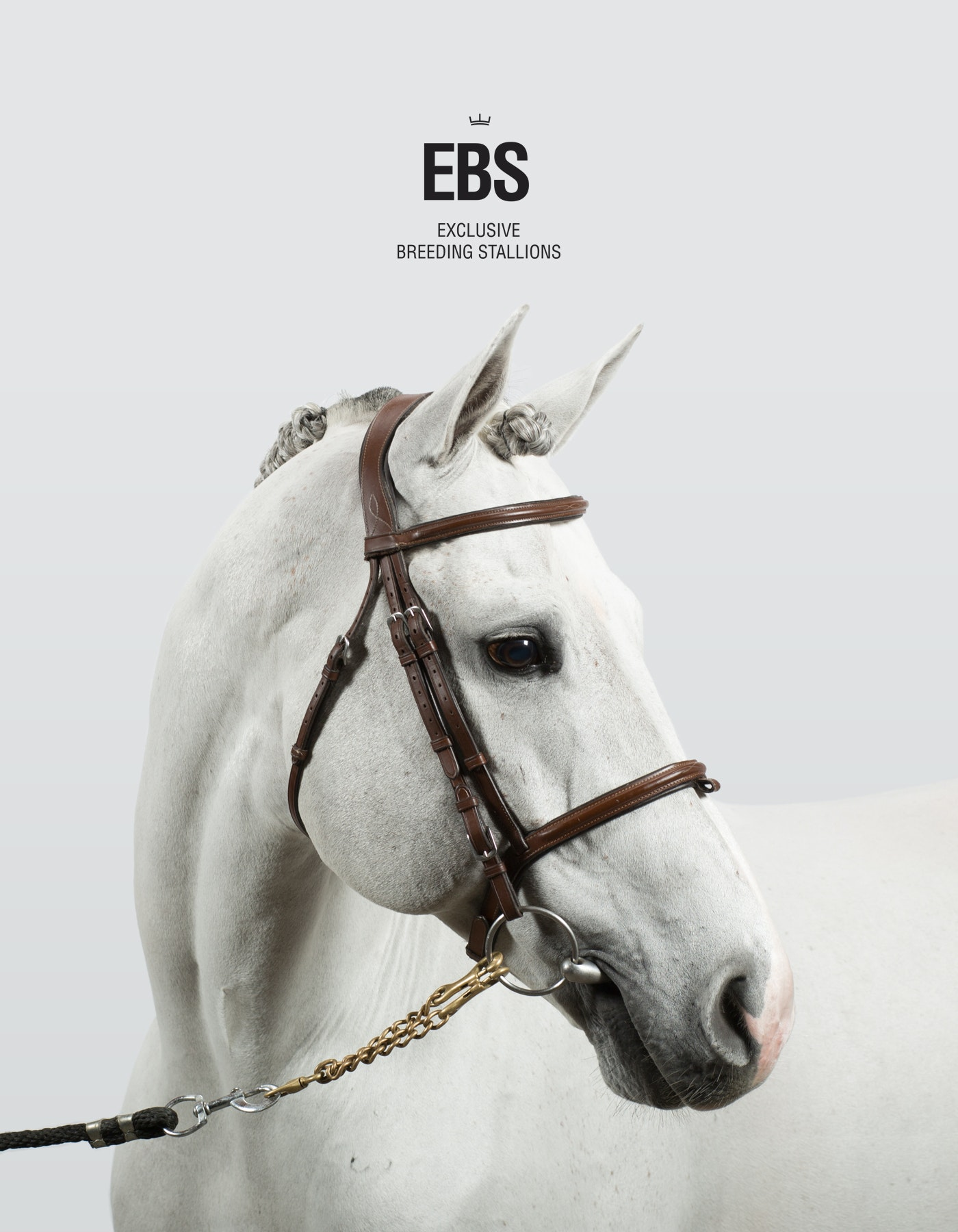 Exclusive Breeding Stallions