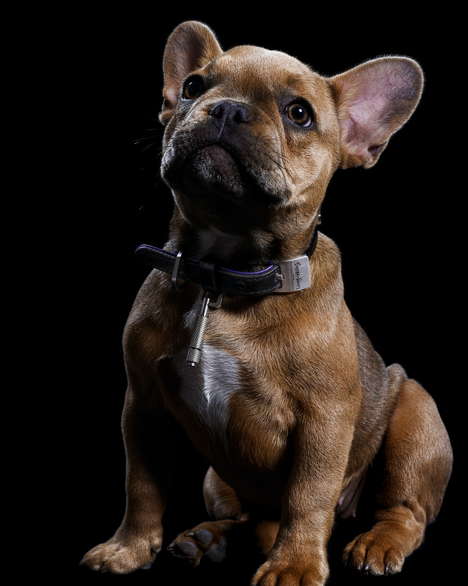 Buster + Punch | Dog Collars