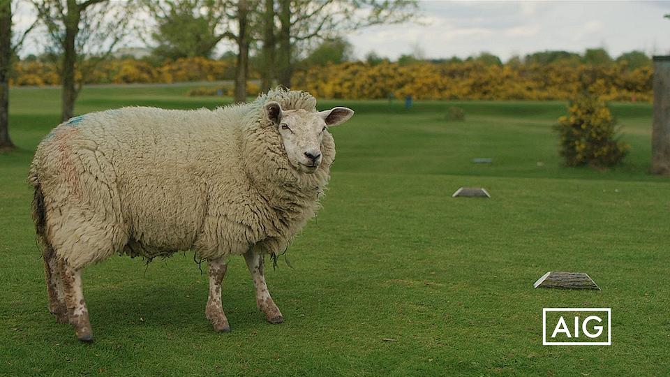 Golf Tales –  Cill Dara
