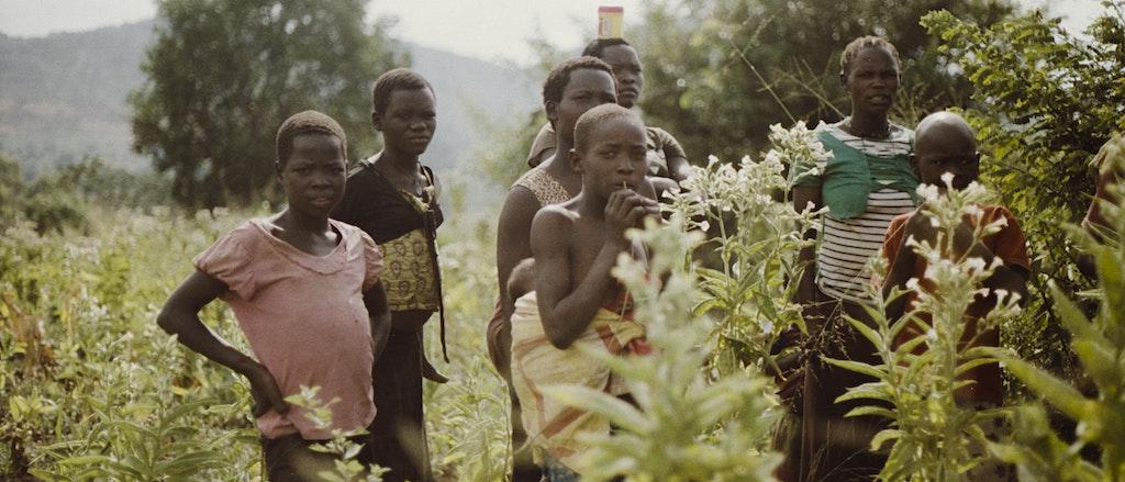 ANALOGUE UGANDA