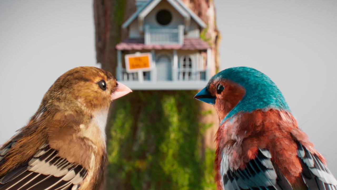 Bolighed Birds