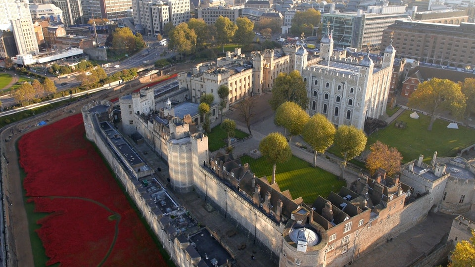 TOWER OF LONDON / Poppies