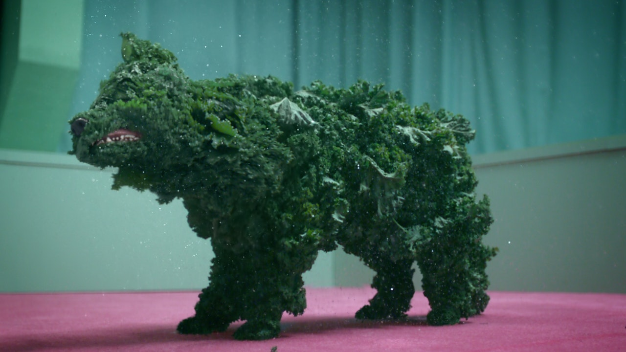 MAIL CHIMP           'KALE LIMP' -