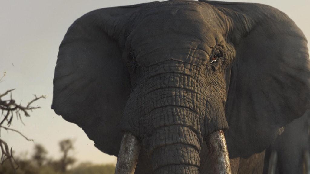 WWF - Elephant Eye