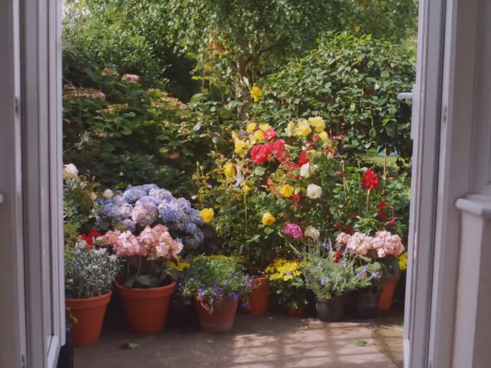 Air Wick| 'Give the Gift of Home' - air wick flowers sceen shot