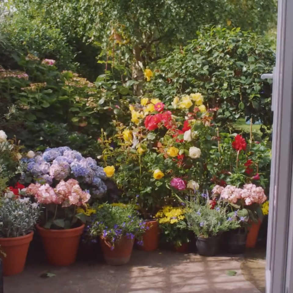 Air Wick| 'Give the Gift of Home' air wick flowers sceen shot