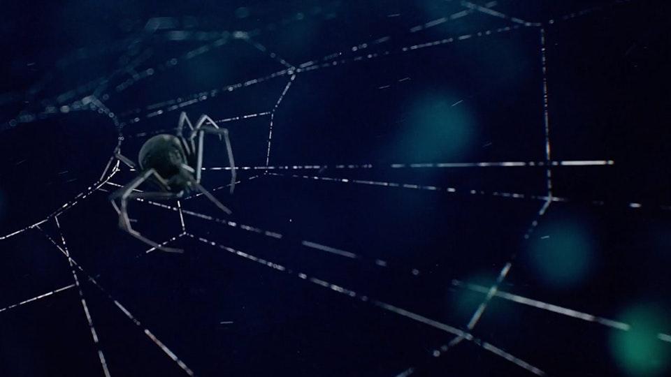 Fiat | Spider Screenshot 2019-09-12 11.43.13