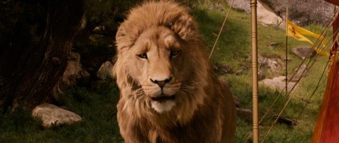 lion_670