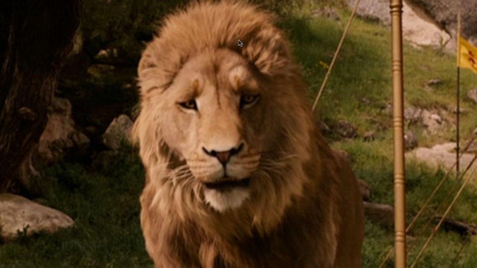 Film lion_670