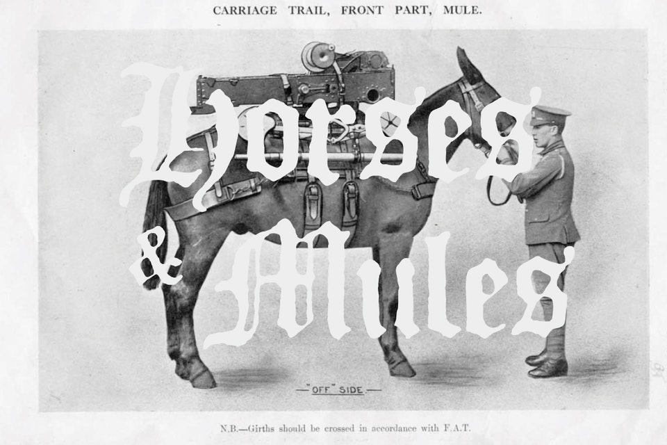 Horses & Mules - Hello & Welcome.
