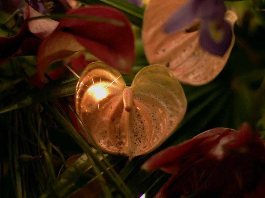 Le Feu et Les Fleurs