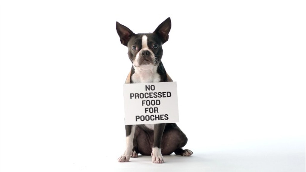 "Fresh Pet - ""Protest"""