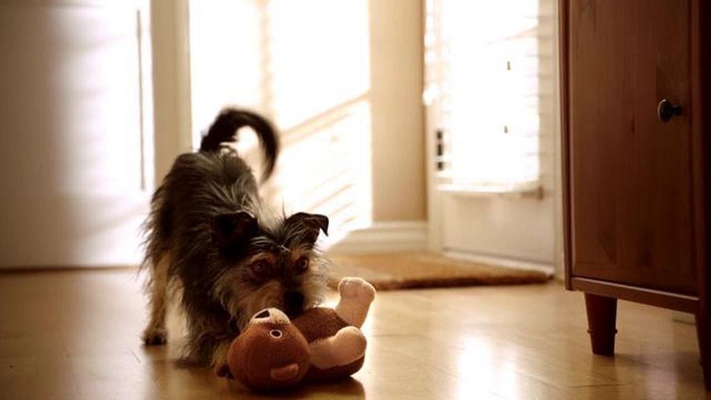 """PETSMART - """"Martha Stewart Pets"""""""