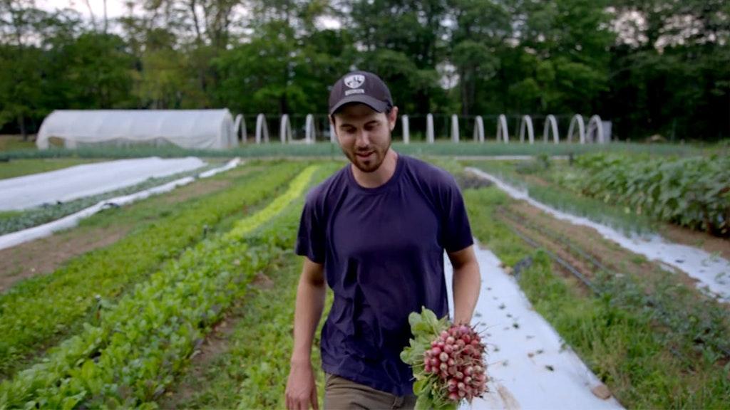 Four Root Farm
