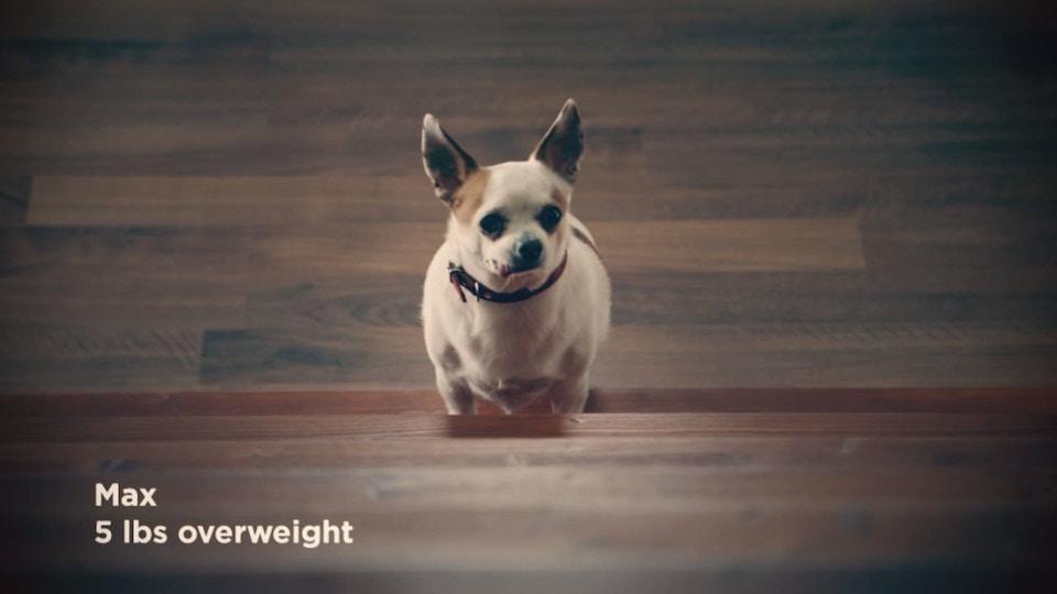 Hills: Creative Ways Overweight Pets Get Around the House