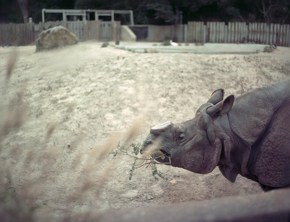 Selects (1998 - 2019) Rhino