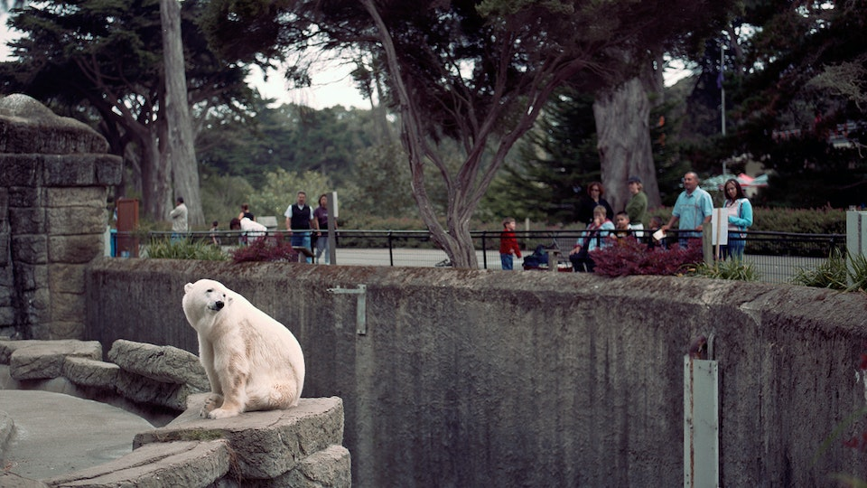 Selected works of Ryan Gerber - The San Francisco Zoo is a lonely place