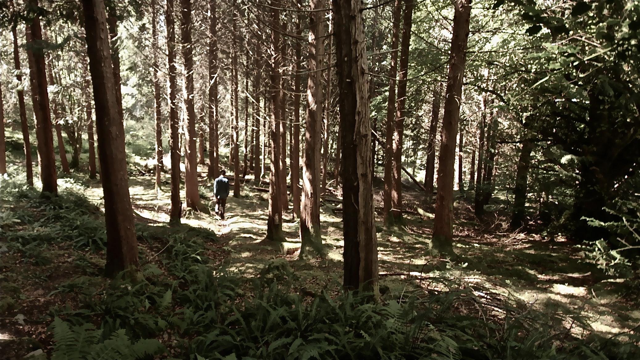 JONO SMITH - scottish forest
