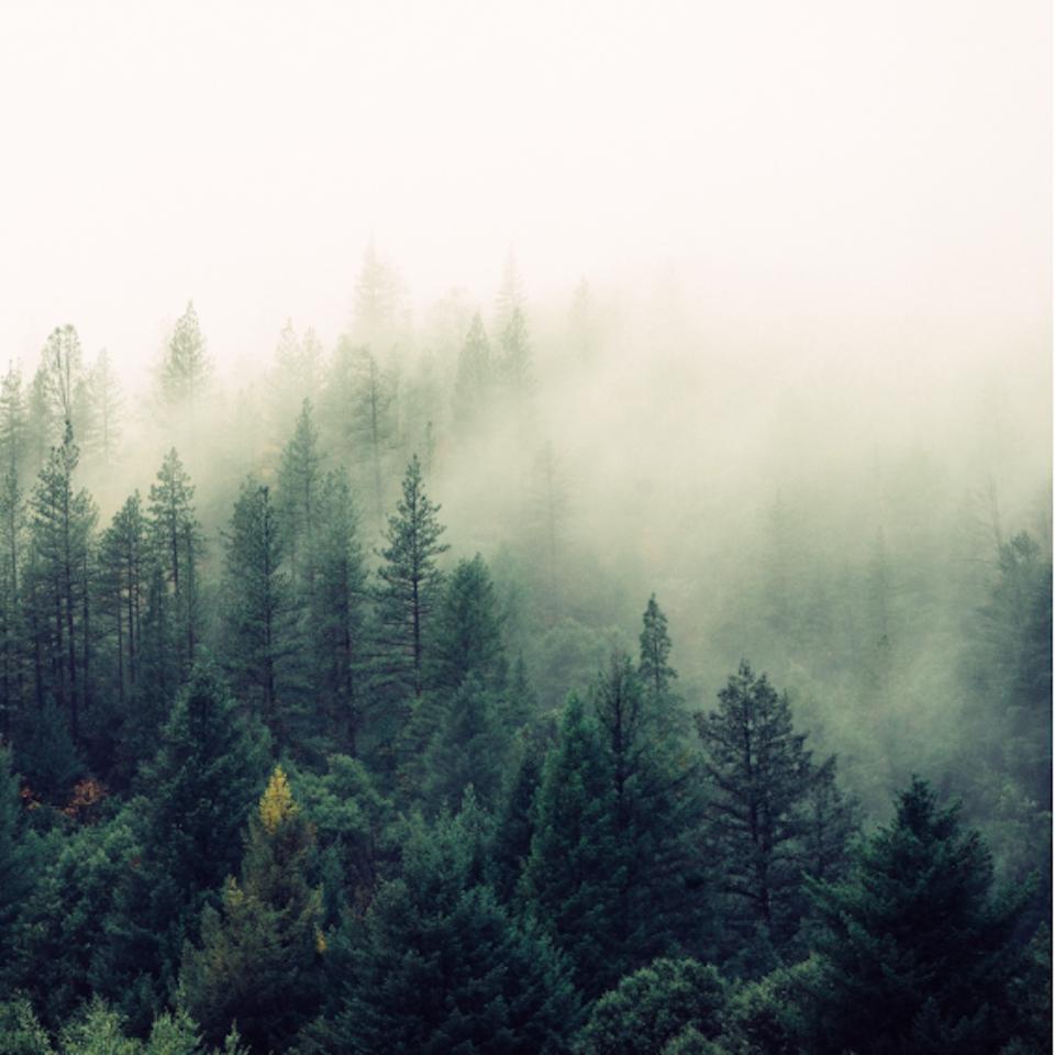 Sarah Nichols - the liminal space | adolescent terrain