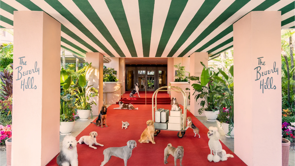 Dogs at the Beverly Hills Hotel