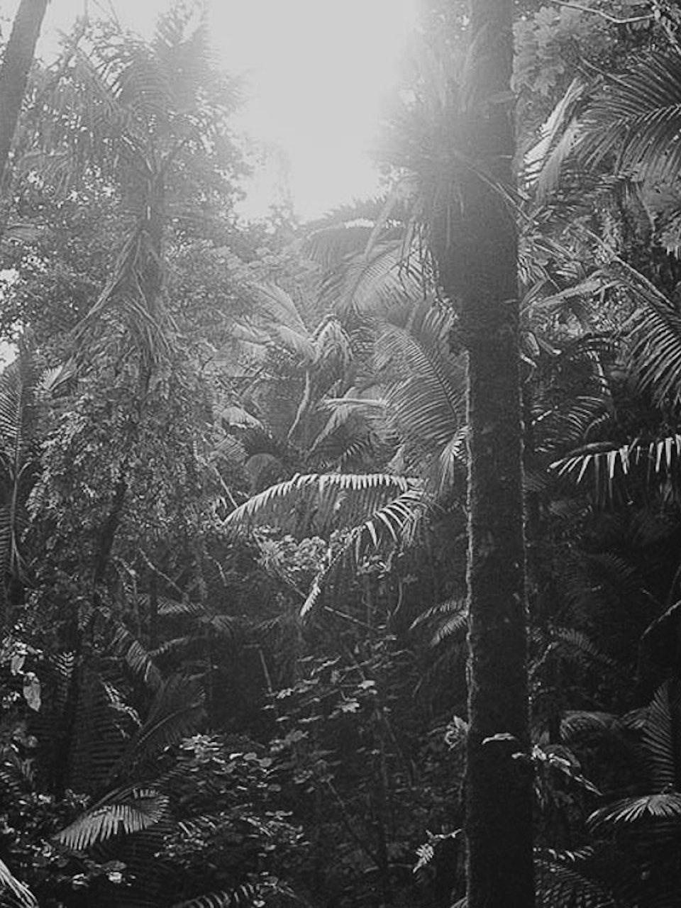 35mm Black and White Film - El Yunque National Rainforest, Rio Grande, Puerto Rico