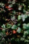 Fuzzy Flora
