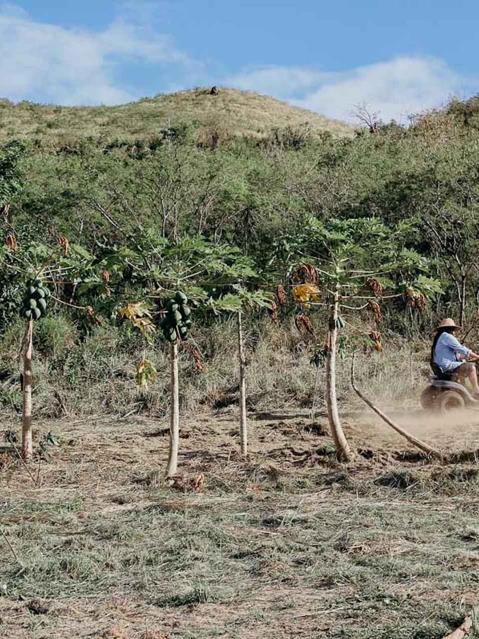 Fondo de Resiliencia Puerto Rico: Guayama Brigada