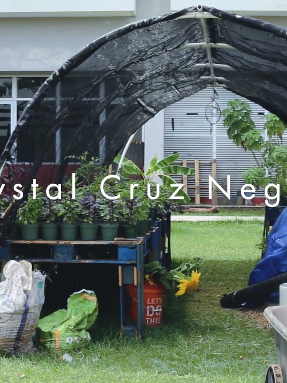 Crystal Cruz Negrón