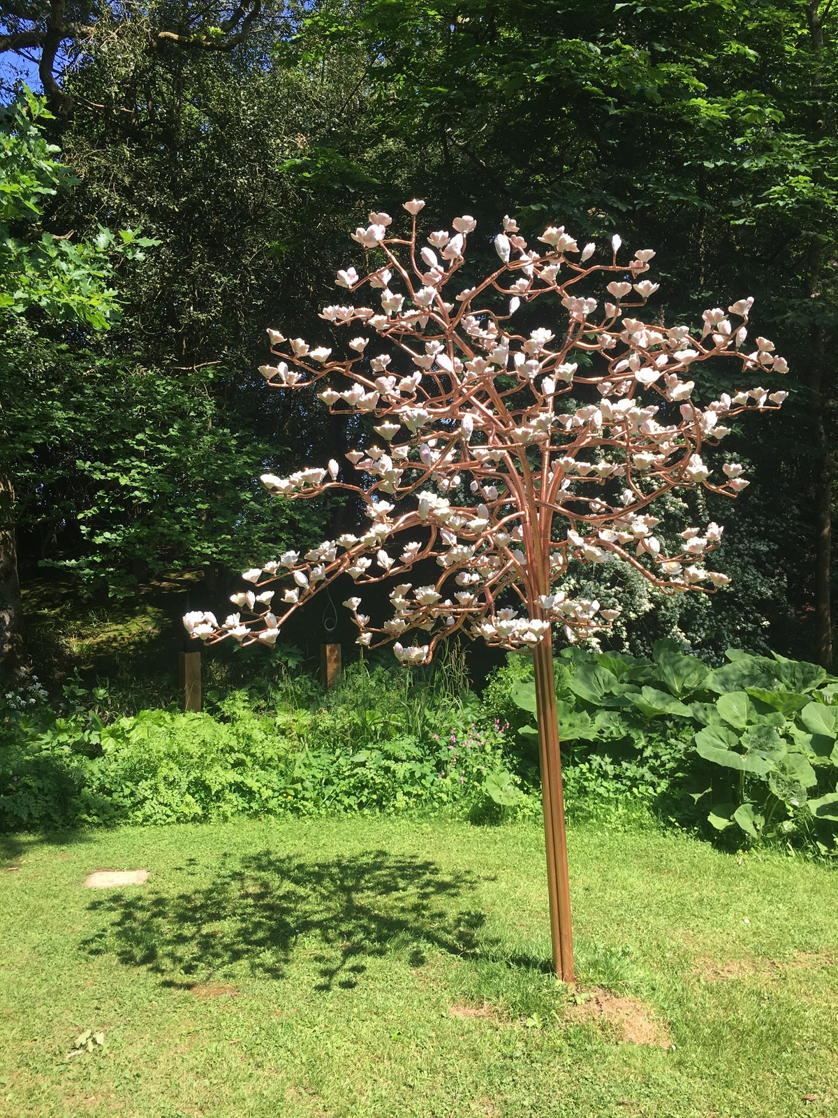 Copper Bloom and Young Magnolia take Root At The Hannah Peschar Sculpture Garden