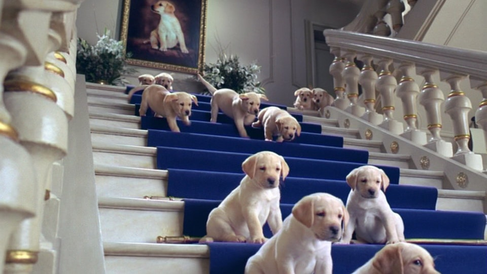 Martin Brierley Cottonelle - 100 Pups