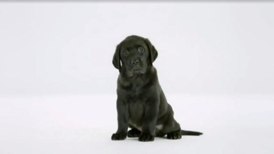 Martin Brierley - Tesco - Home & Pet Insurance