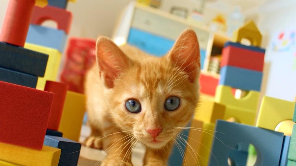 Martin Brierley - Friskies - Kitten