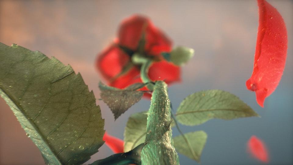 Autumn Internationals - Title Sequence
