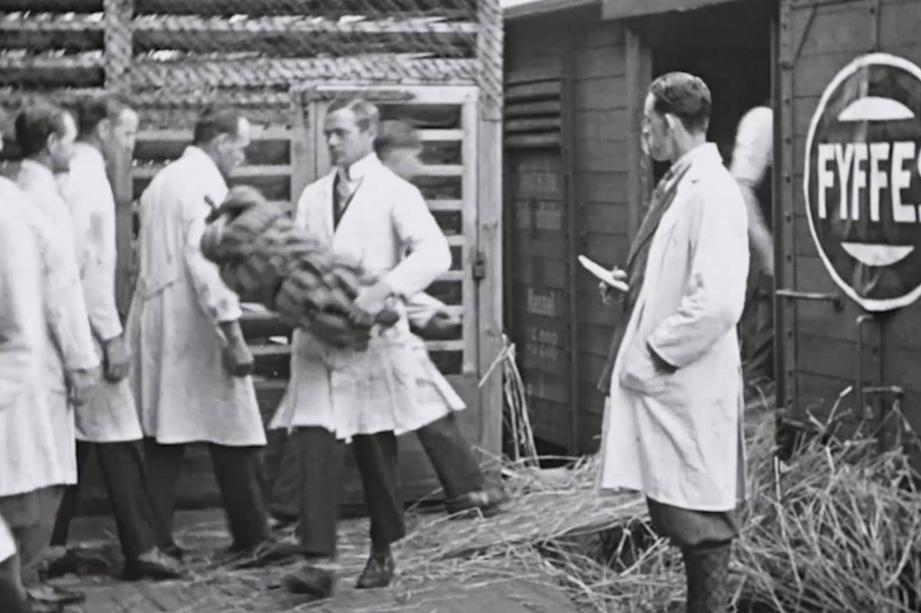 FYFFES | Discover More