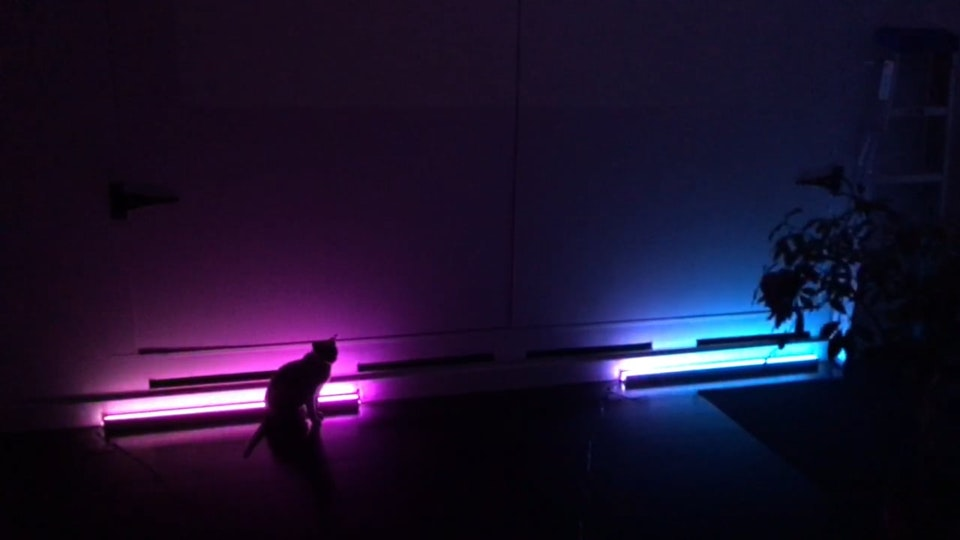 Light Installation for Lustre and LULU - (cat for scale)