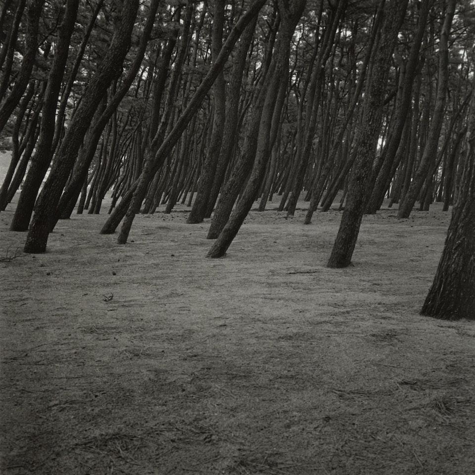 Jantien de Bruin - Bos (2001 Japan)