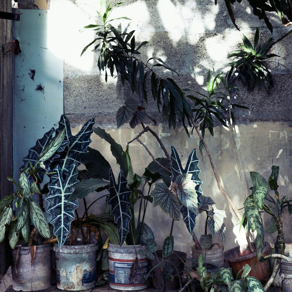 Violaine Chapallaz - ©Violaine Chapallaz Mauritius serie Plantjes
