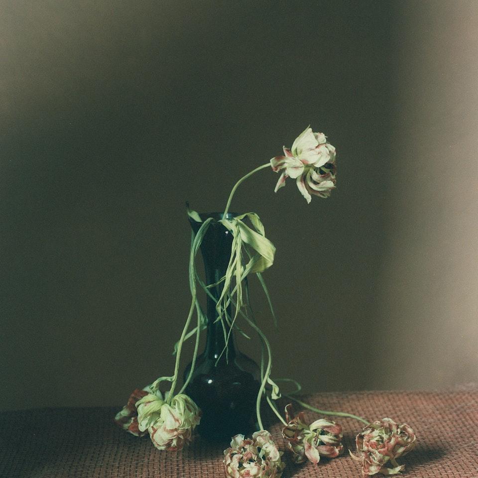 Violaine Chapallaz - ©Violaine Chapallaz Dutch beauty